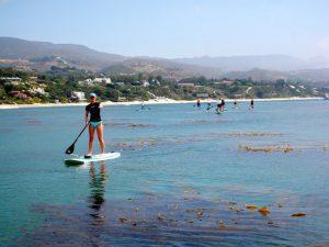 Eco-tour - with kelp