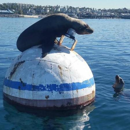 Sea Lion Lesson